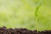 زراعة النّور في كون منشور: اقتلاعُ نوابت الكذب في الخلق